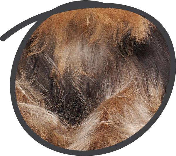 Avantages Chef Canin : poils plus brillants