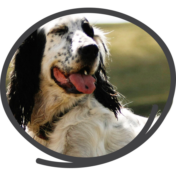 Avantages Chef Canin : meilleure espérance de vie